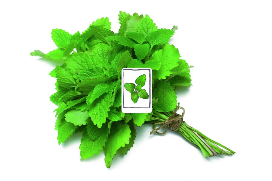 GrowingPaper (70 gram)