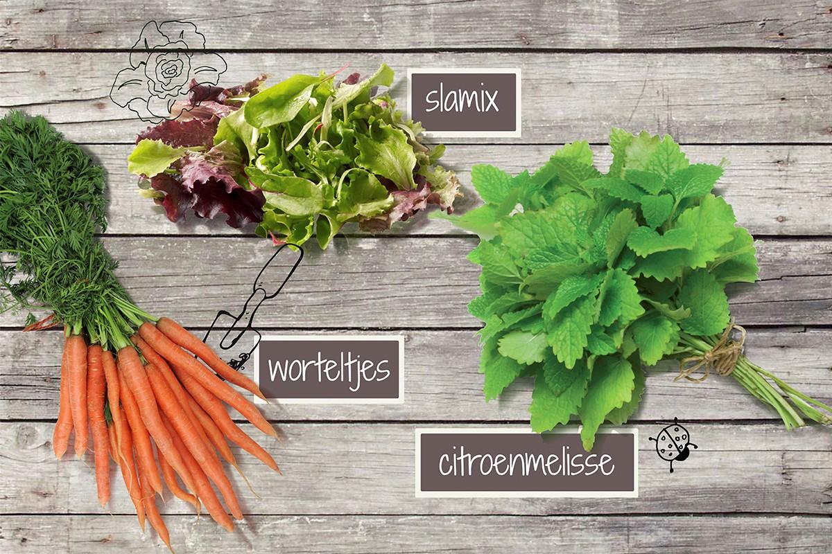 Je moet de groenten van Growingpaper hebben!