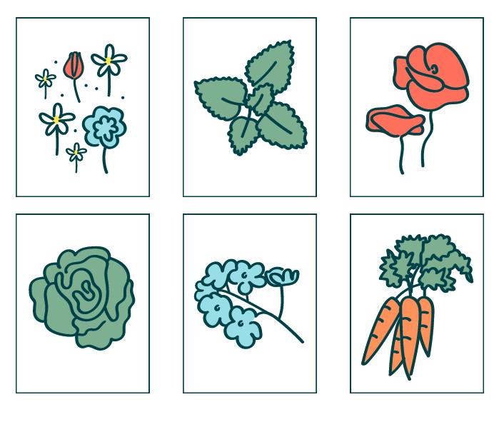 field flower, lemon balm, poppy, lettuce, forget me not, carrot seeds