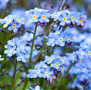 Forget me not flowers blooming from seed paper